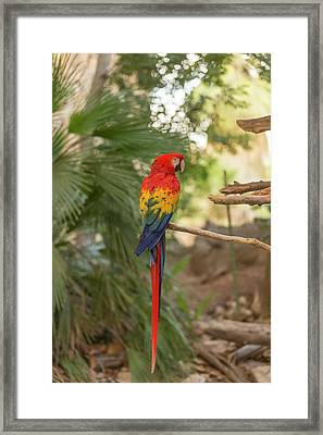 Framed Print featuring the photograph Macah by Josef Pittner