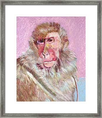 Macaque Framed Print