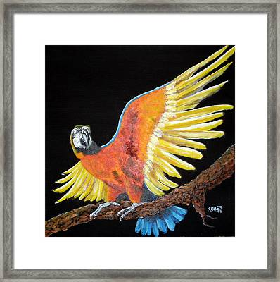 Macaw - Wingin' It Framed Print by Susan Kubes