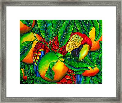 Macaw And Oranges - Exotic Bird Framed Print by Daniel Jean-Baptiste