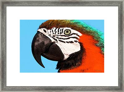 Macaw Bird - Rain Forest Royalty Framed Print by Sharon Cummings