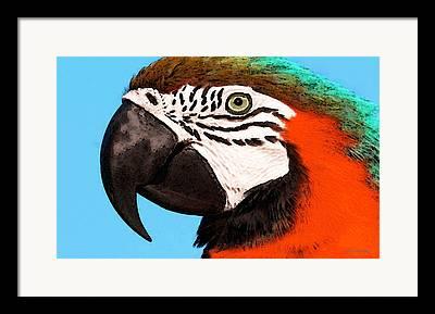 Rain Forest Digital Art Framed Prints