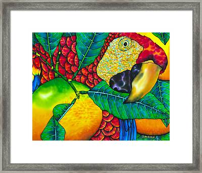 Macaw Close Up - Exotic Bird Framed Print by Daniel Jean-Baptiste