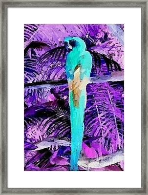 Macaw Fantasy Framed Print