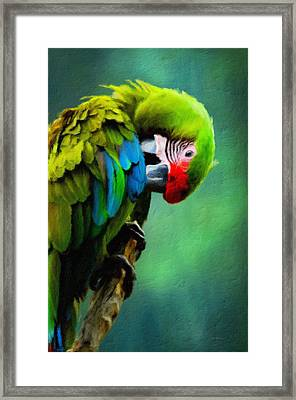 Macaw Green Feather Preen Framed Print