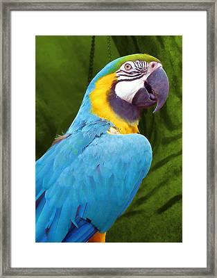 Macaw Framed Print by JAMART Photography
