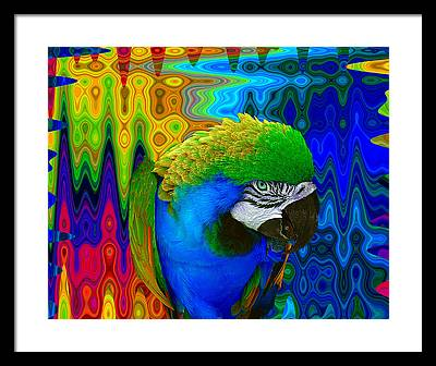 Macaw Photographs Framed Prints
