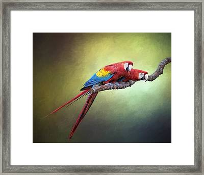 Macaw Parrots Out On A Limb Framed Print by David and Carol Kelly