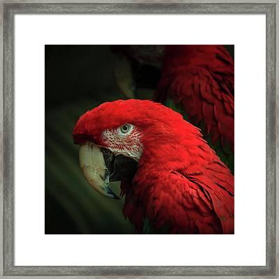 Macaw Portrait Framed Print by Joni Eskridge
