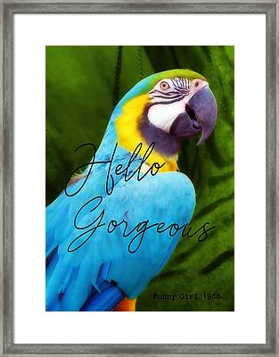 Macaw Quote Framed Print by JAMART Photography