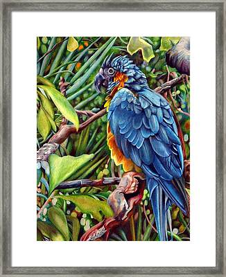 Macaw Framed Print by Sonja Funnell