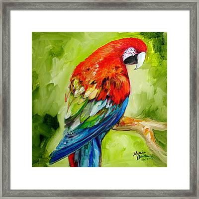 Macaw Tropical Framed Print by Marcia Baldwin