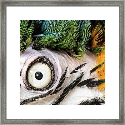 Macaw Up Close And Personal Framed Print