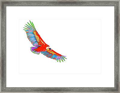 Macaw Vulture Framed Print by Richard Patmore