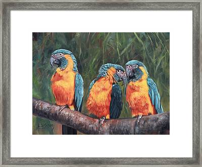 Macaws Framed Print by David Stribbling