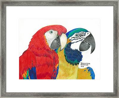 Macaws In Living Color Framed Print by Sharon Blanchard