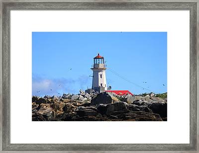Machias Seal Island Lighthouse Framed Print by John Burk
