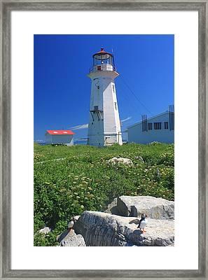 Machias Seal Island Lighthouse Puffins Framed Print by John Burk