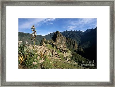 Machu Picchu And Bromeliad Framed Print by James Brunker