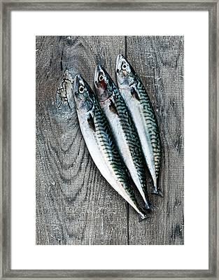 Mackerel Framed Print by Carlo A