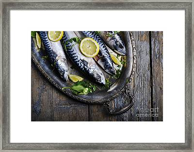 Mackerels On Silver Plate Framed Print by Jelena Jovanovic