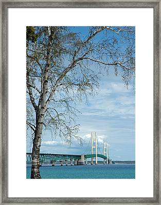 Mackinac Bridge Birch Framed Print