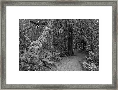 Macmillan Cathedral Grove Black And White Framed Print by Adam Jewell