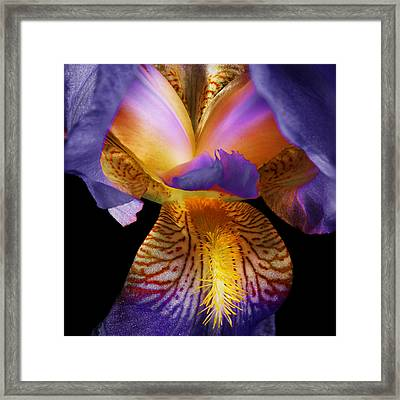 Macro Abstract Photo Of Iris On Black Framed Print by Donald  Erickson