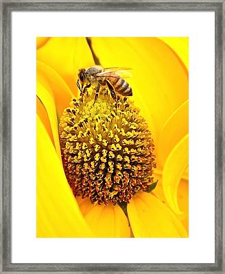 Macro Bee Framed Print