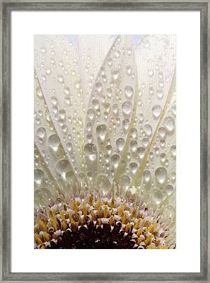 Macro Close Up Of A Daisy Flower Framed Print by Mark Duffy