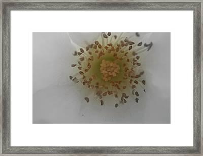 Macro Flower Framed Print by Bransen Devey