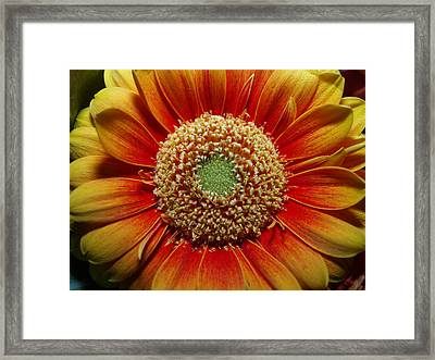 Macro Flower Framed Print by Michael Canning