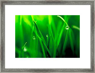 Macro Image Of Fresh Green Grass Framed Print