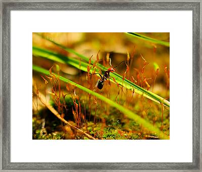 Macro Of An Ant Framed Print by Jeff Swan