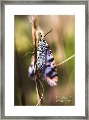Macro Of Colourful Moth Insect Holding Branch Framed Print