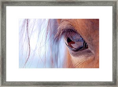 Macro Of Horse Eye Framed Print by Anne Louise MacDonald of Hug a Horse Farm