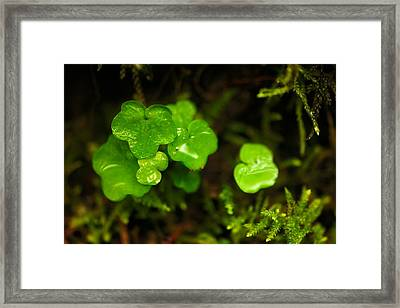 Macro Of Rain Soaked Buds Framed Print by Jeff Swan