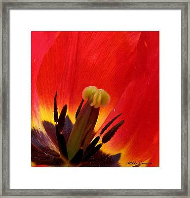 Macro Of Tulip Framed Print by Mikki Cucuzzo
