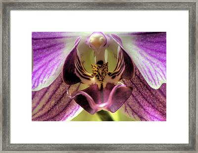 Macro Orchid Framed Print