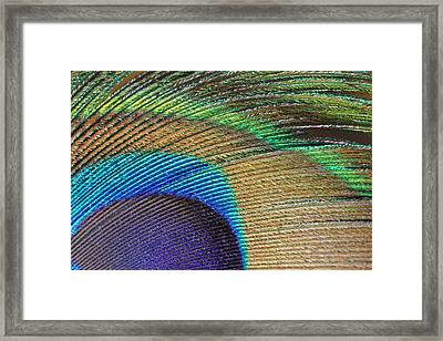 Macro Peacock Feather Framed Print