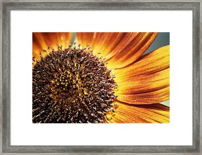 Macro Sun Framed Print
