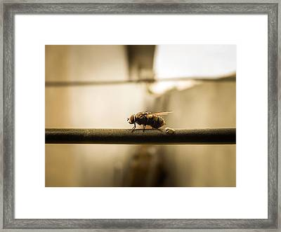 Macro Thing Framed Print by Ram Prasad