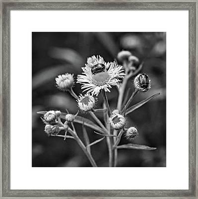 Macro Weed Watching 2 Bw Framed Print by Steve Harrington