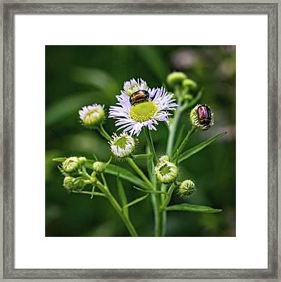 Macro Weed Watching 2 Framed Print by Steve Harrington