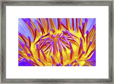 Macro's Lotus Framed Print