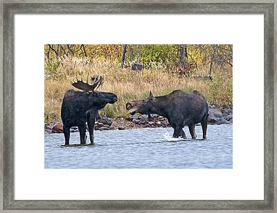 Mad Mamma Moose Framed Print