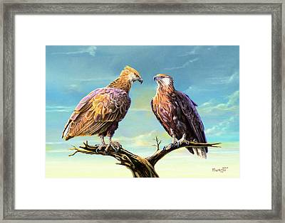Madagascar Fish Eagle  Framed Print