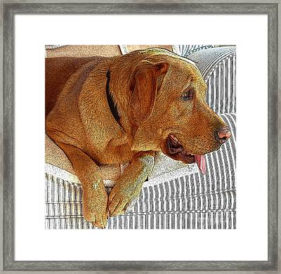Maddie Framed Print by Diane E Berry