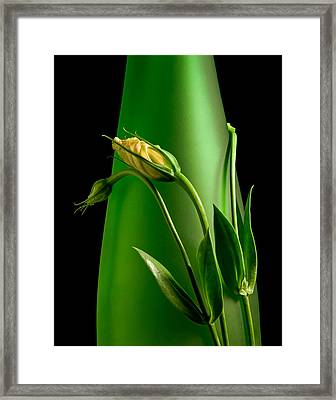 Made For Each Other Framed Print by Tom Mc Nemar