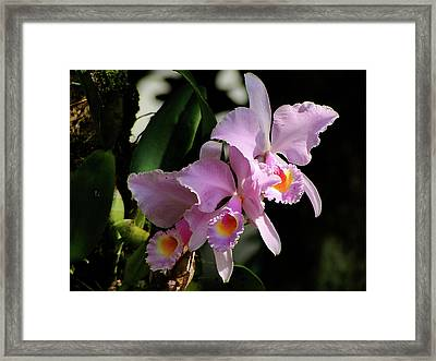 Framed Print featuring the photograph Made In The Shade by Blair Wainman